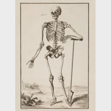 """Pocztówka – Antoine Prévost  """"Układ mięśniowy i szkieletowy wg..."""